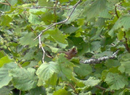 Uno scoiattolo :-D