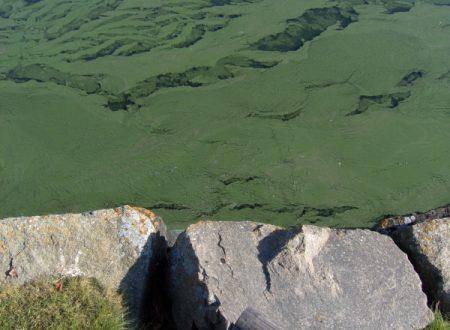 La morte del Lago della Serraia