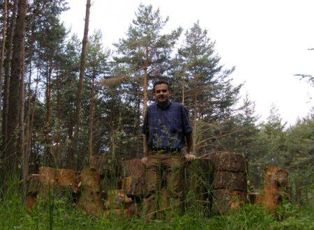 In ferie per tagliare alberi